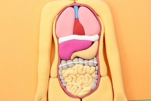 下痢の原因は腸